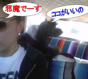2012.2.4なっつ・・・邪魔