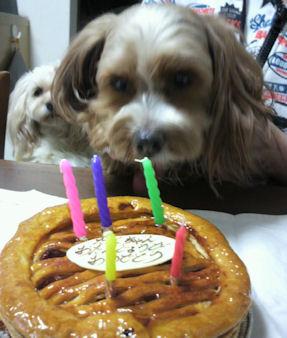 2012.2.22ケーキ