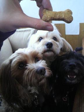 2012.3.3クッキー