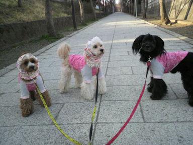 2012.4.2たっぷり散歩