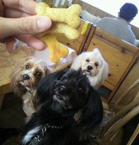 2012.4.4クッキー