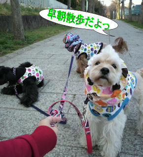 2012.4.10早朝さんぽ
