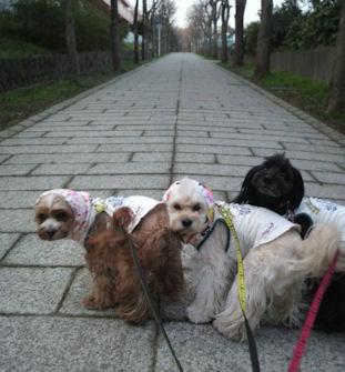 2012.4.13お散歩