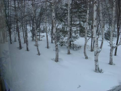 224豪雪