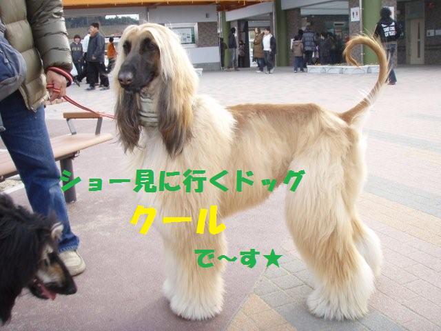 名古屋インター2008.3.2(1) 1730