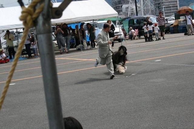 和歌山ドックショー2日目 047