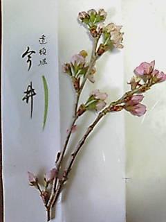imainosakura.jpg