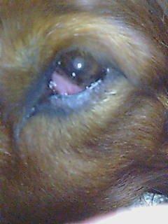 2006-7-26ジュライの目
