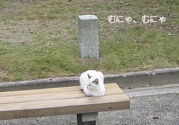 京都御苑の猫