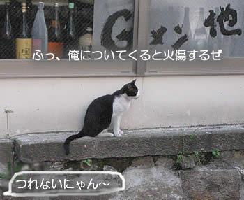 京のにゃんこ