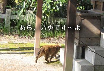 京都観光神社 猫