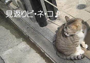 蛸薬師 猫