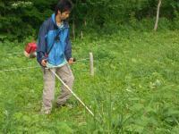 ブナ林の草刈り