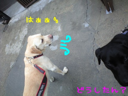 CA390008.jpg