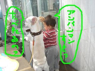 CIMG1415_convert_20080605215042.jpg