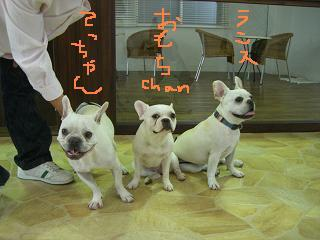 CIMG2216_convert_20080622185753.jpg