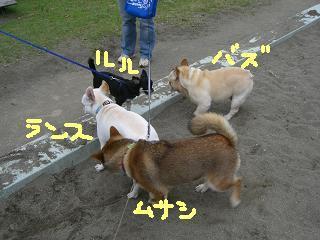 CIMG2483_convert_20080703115322.jpg