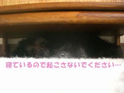 20090327.jpg
