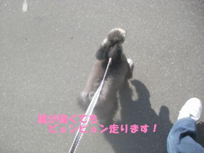 20090427.jpg