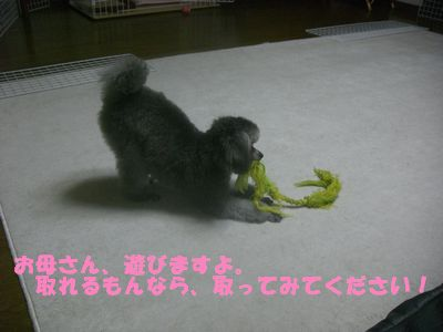 20090709.jpg