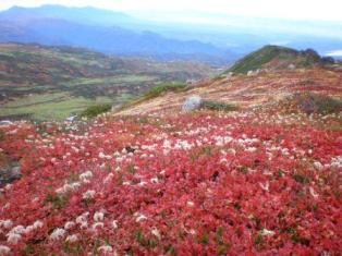 当麻のお花畑