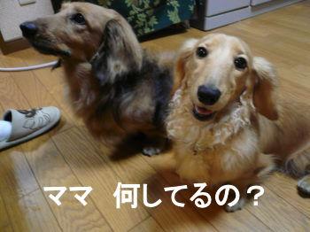 P1010164_SP0001.jpg