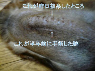 P102038700.jpg