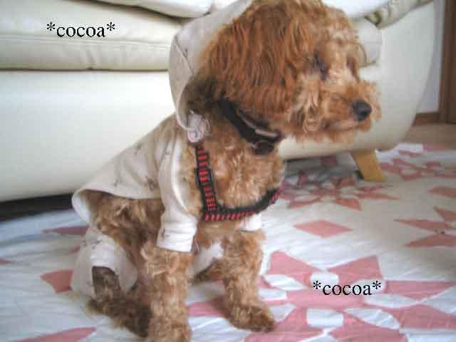 ココアレインコートー2