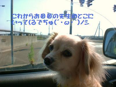 めんこチャン3