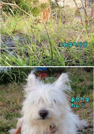 image210409.jpg