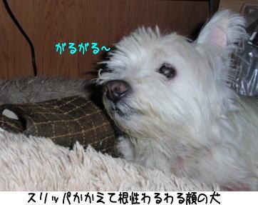 image210515.jpg