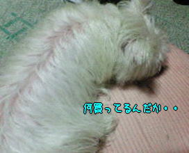 image210517a.jpg