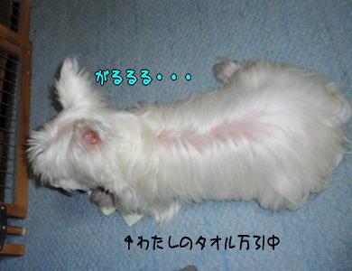 image210608.jpg