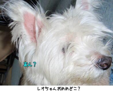 image210609a.jpg