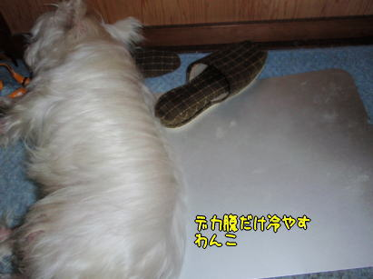 image210704a.jpg