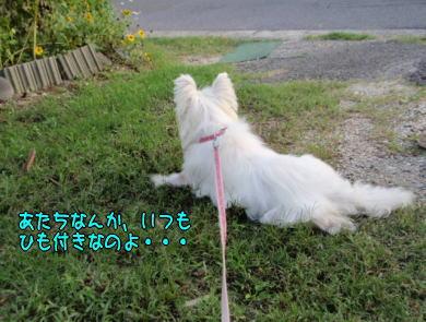 image210724.jpg