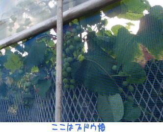 image210819a.jpg