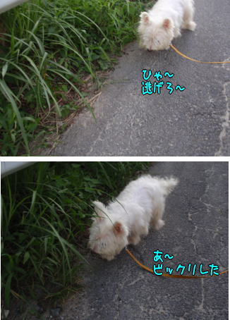 image210827a.jpg