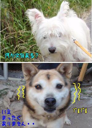 image210903a.jpg