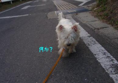 image210917a.jpg