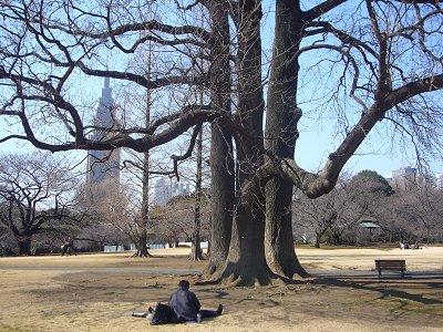 新宿御苑2008 スケッチ場所