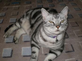 飼い猫のレオ様