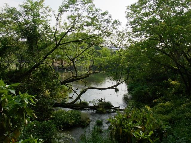 柿田川公園 - 第2展望台から