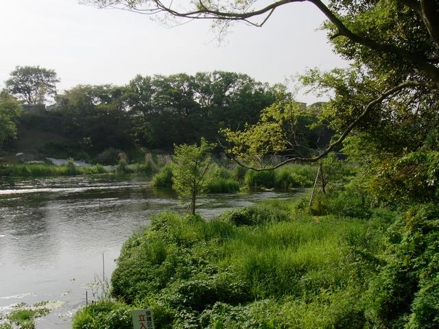 柿田川公園 - 八つ橋から