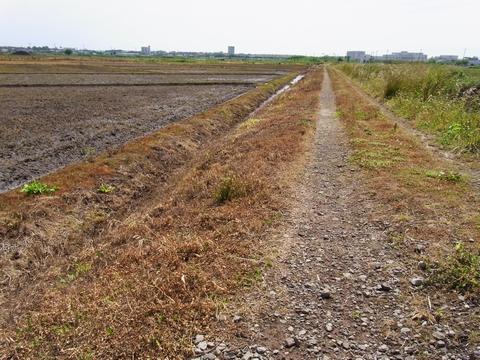 除草された畦道