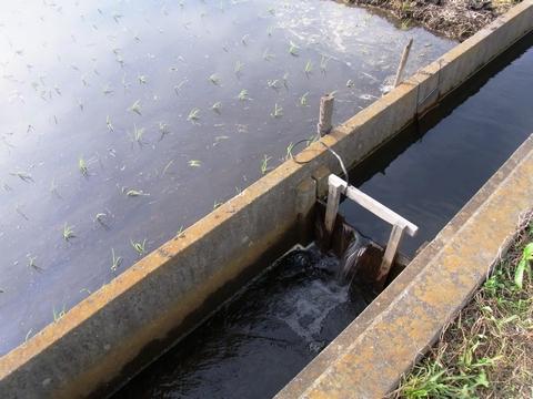 田んぼ横の水路