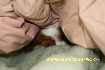 2008/11/03 その6