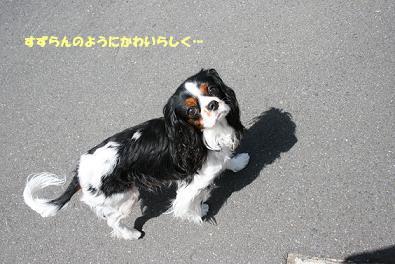 2009/04/26 その2