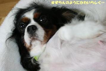 2008/10/24 その1