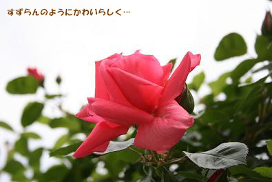 2009/05/03 その1